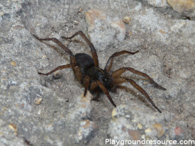 How to Keep Spiders Away From Playground – Naturally